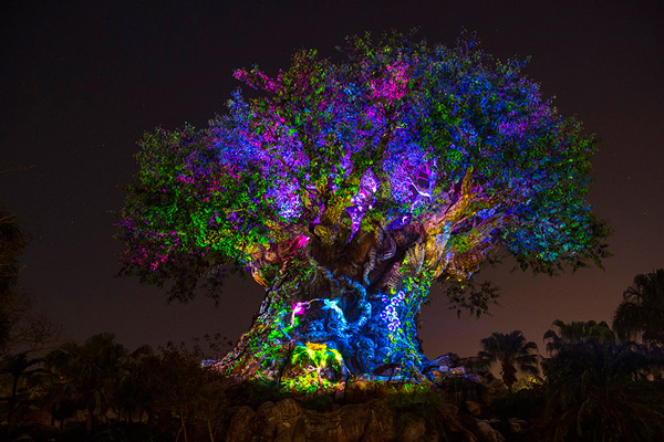 The Tree of Life at Disney's Animal Kingdom theme park illuminated at night revealing the outlines of numerous carved animal figures