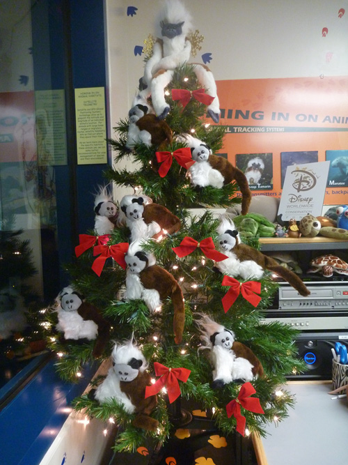 Cotton-Top Tamarins in a Christmas Tree