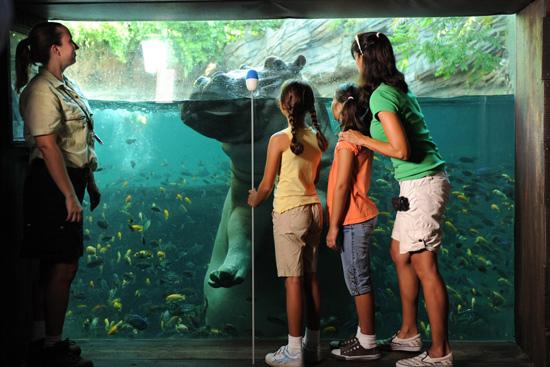 Underwater Hippo Viewing Area at Disney's Animal Kingdom