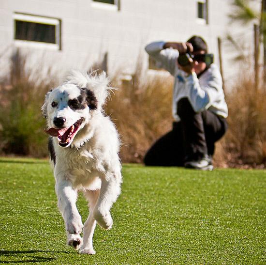A Dog at Best Friends Pet Resort