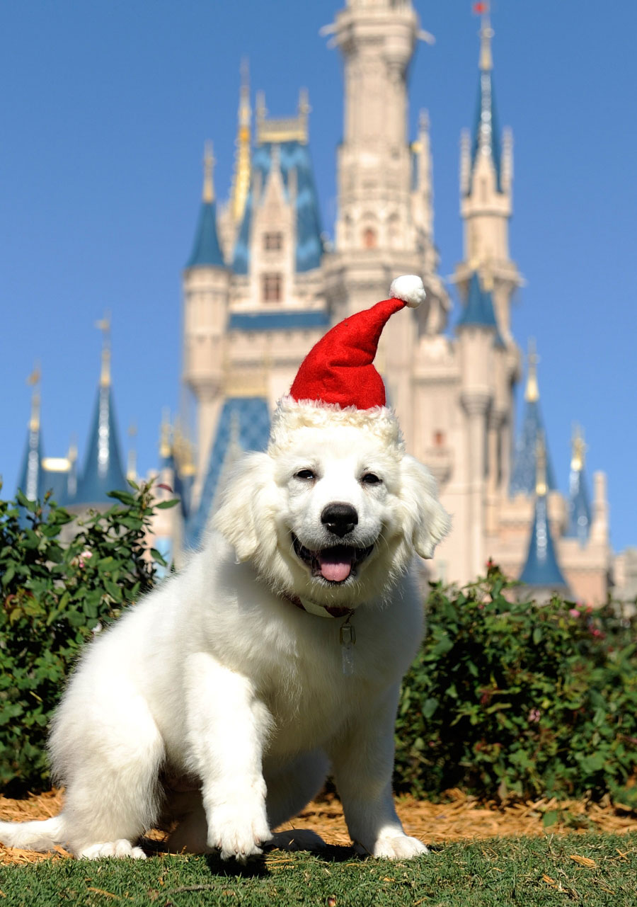 Disneys The Search for Santa Paws She Scribes