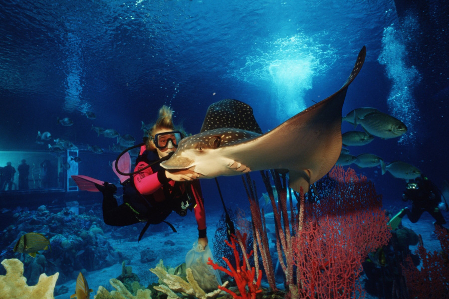 underwater restaurant disney world. Modren Disney The Living Seas Pavilion At Epcot To Underwater Restaurant Disney World