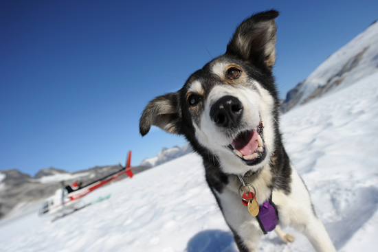 In Juneau, guests can meet the crew of Alaska Heli Mush and the sled dogs from Iditarod.