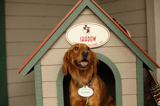 Shadow Greets Guests at Disney's Hilton Head Island Resort