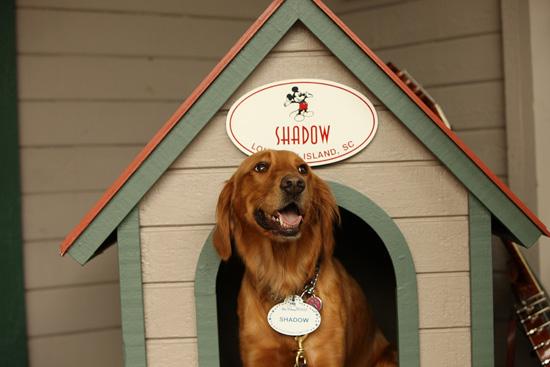 Shadow Greets Guests at Disney's Hilton Head Island Resort
