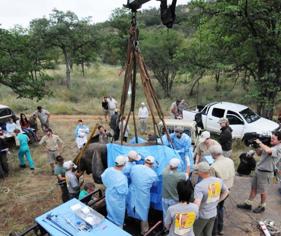 Disney Elephant Conservation Efforts