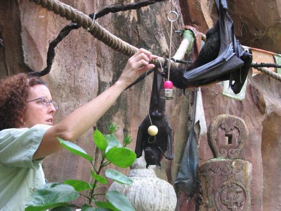 Wildlife Wednesdays: Disney's Animal Kingdom Goes to Bat for Bats on October 26