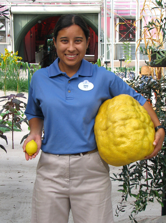 Plant Science Intern Dani at Epcot Holds a 'Normal-Sized' and 15lb Lemon in her Hands