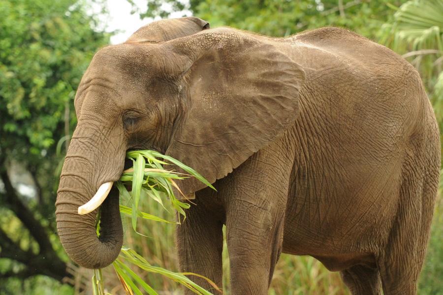 Wildlife Wednesdays: Expert Nutrition Team at Disney's Animal ...