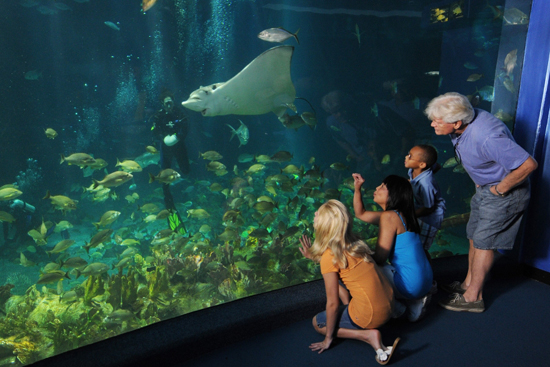 The Seas With Nemo & Friends Welcomed the Newest Spotted Eagle Ray Pup to Disney's Animal Kingdom