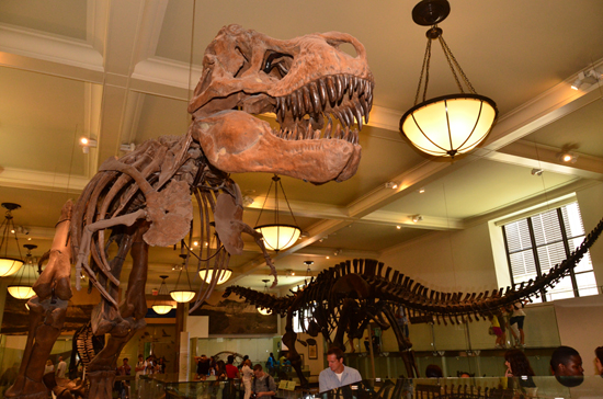 Disney Cruise Line Port Adventures Features Visits to the American Museum of Natural History
