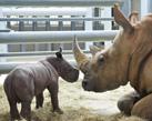 Disney Photographer Gene Duncan Captures Shots of Disney's Animal Kingdom's Newest White Rhino