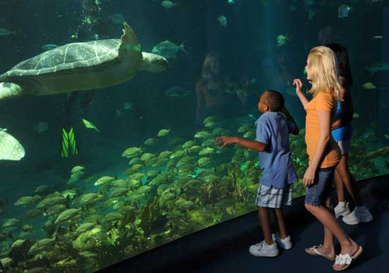 Get Up Close and Personal with Turtles at The Seas with Nemo & Friends