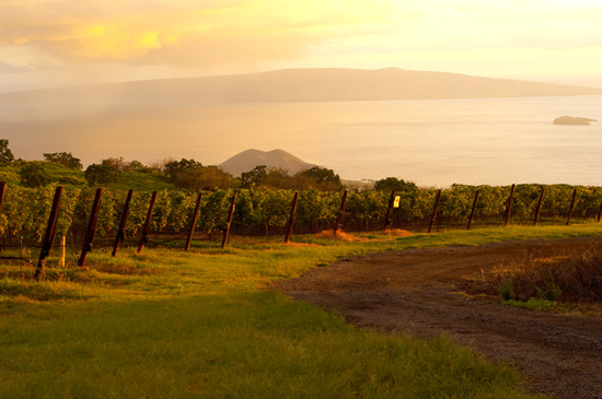 Go on the Colors of the Sunset Haleakalā Adventure on a Disney Cruise to Hawai'i