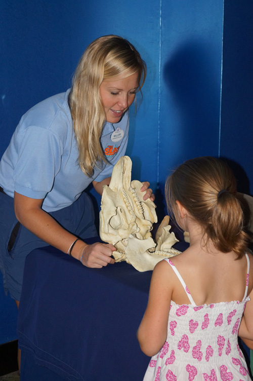 Guests Can Learn About Manatees at The Seas with Nemo & Friends at Epcot During International Manatee Day