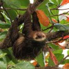 Exploring Costa Rica with Adventures by Disney – Sloth