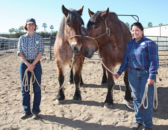 Circle D Ranch Welcomes Two New Horses to the Disneyland Resort