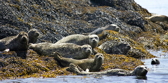 Discover Alaska's Annette Island with Disney Cruise Line