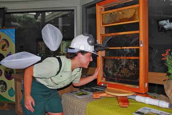 Disney's Animal Kingdom is All Abuzz on Pollinator Day, June 5 at Walt Disney World Resort