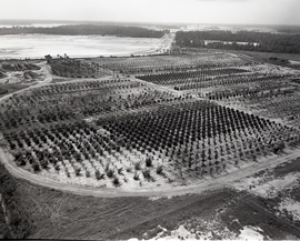 The Walt Disney World Resort Tree Farm in August 1969