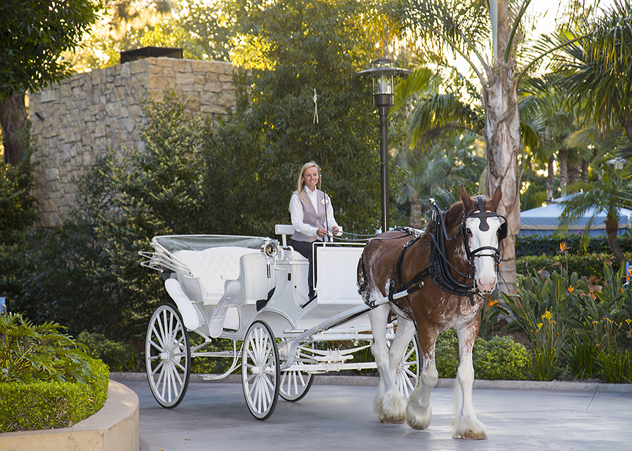 Image result for horse carriage disney world