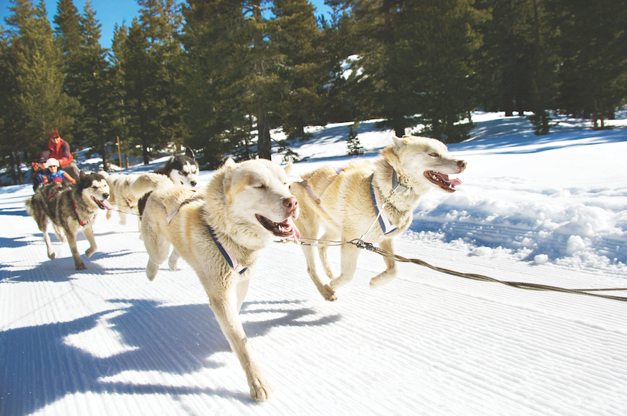 Dog Sledding on Adventures by Disney Winter in Wyoming Long Weekend Vacation Package