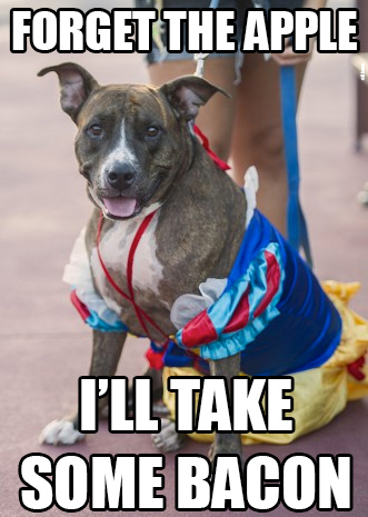 Favorite Memes From Disney Side Dogs Day At Magic Kingdom