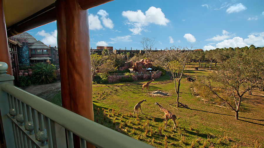 Room With A View Safari View Suite At Disney S Animal