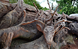 Tree of Life Grows New Roots at Disney's Animal Kingdom