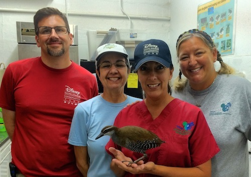 The Disney team includes (from left) Paul Schutz, zoological manager; Lidia Castro, veterinary technician; Leanne Blinco, Animal Health zoological manager; and Dr. Deidre Fontenot, Operations manager for the Animal Health team, with Staples, one of the outreach education birds.