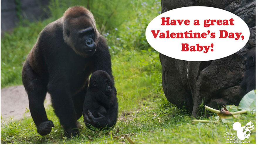 Wildlife Wednesday Animal Valentines Day Cards to Share – Animal Valentine Cards