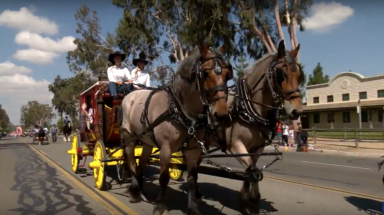 Disneyland Resort Horses Bug and Finn Featured in Norco Horseweek Parade