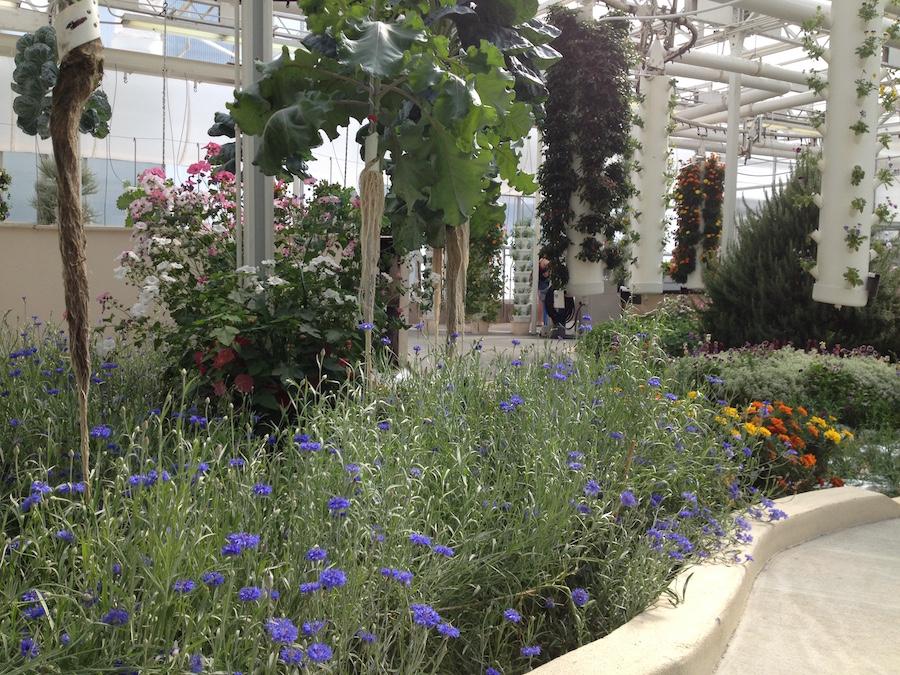 Epcot International Flower & Garden Festival Celebrates Earth Day