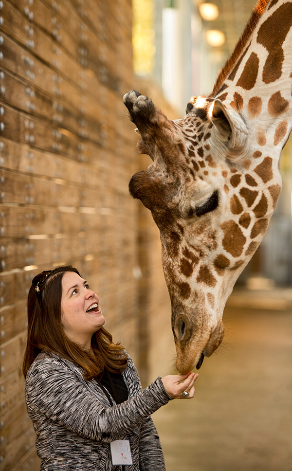 A Woman and a Giraffe at Sense of Africa Tour at Disney's Animal Kingdom at Walt Disney World Resort