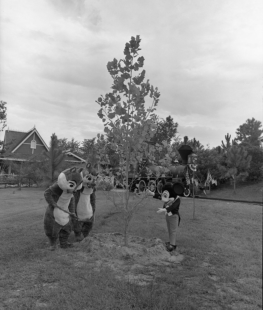 Disney Days of Past: Celebrating Arbor Day!