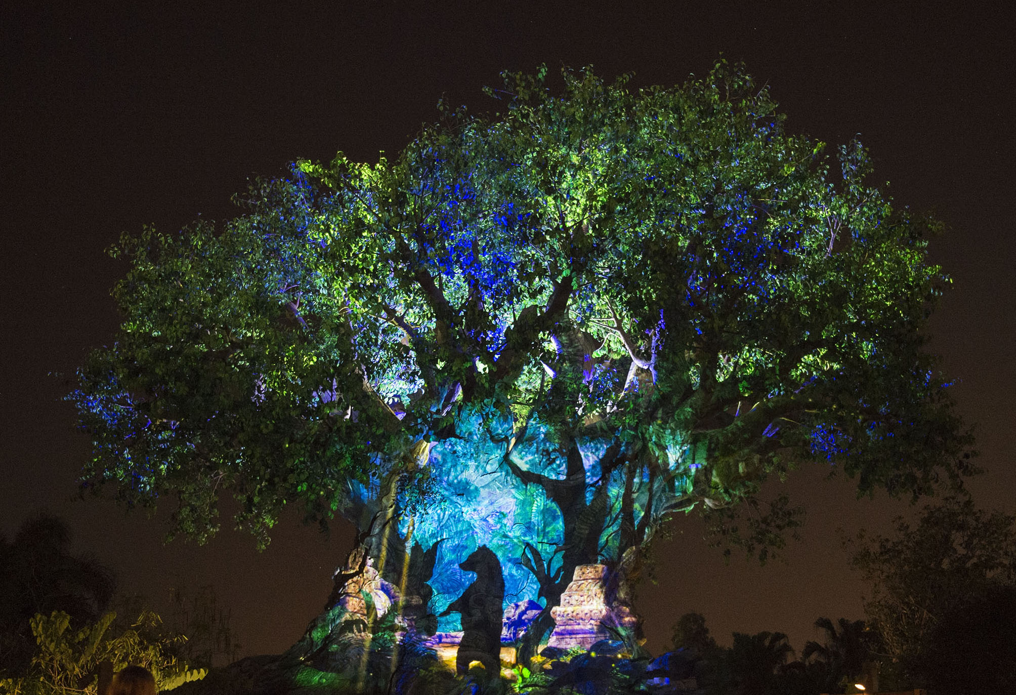 first ever night experiences at disney s animal kingdom begin may