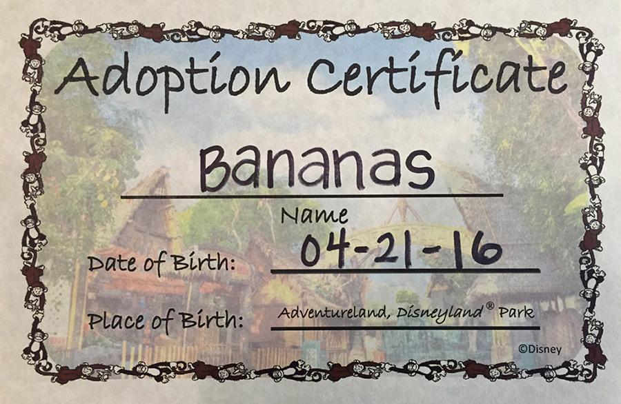 Adventurland Adoption Certificate at Adventureland at Disneyland park