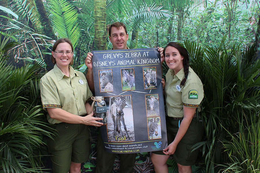 "Keepers Rain, Mike and Meaghan planned the zebra-naming event for Disney's Animal Kingdom Cast Members. They are seen here with the Grevy's zebra family tree while celebrating ""Zach"" as the winning name for the new foal."