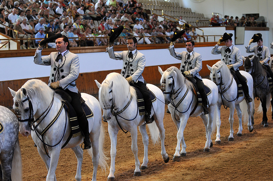 Andalusian Horse Show - Port Adventure with Disney Cruise Line