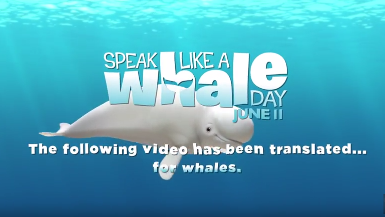 Speak Like a Whale Day recap