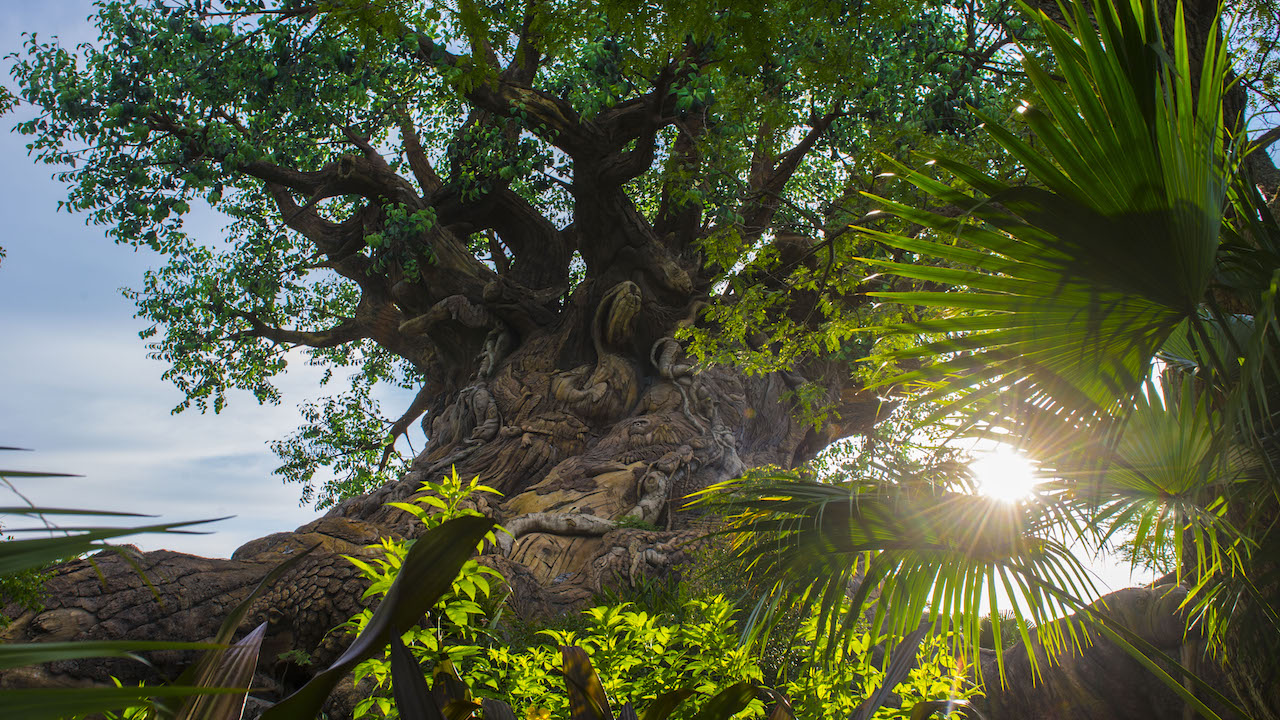 The Sun Rises on the Tree of Life