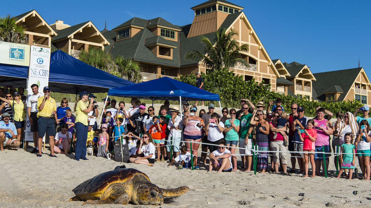 Tour de Turtles Marathon Begins at Disney'd Vero Beach Resort