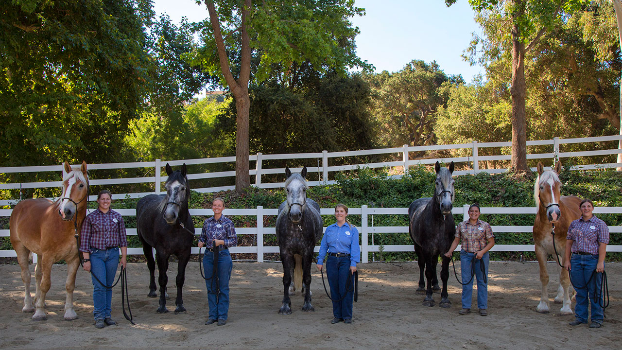 New Main Street Horses Join Disneyland Resort Cast