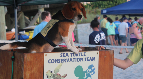 Wildlife Wednesday: Ready, Set, Swim! Tour de Turtles Marathon Begins