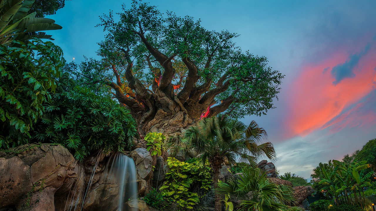 Disney Parks After Dark: A Colorful Sunset at the Tree of Life ...