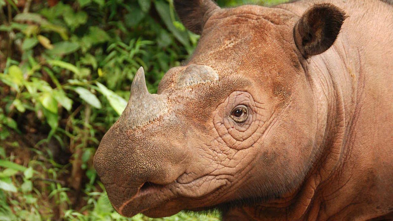 Disney Helps 'Reverse the Decline' of Rhinos