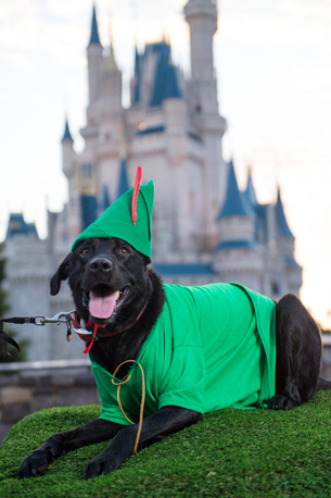 Disney Dog Halloween Costume Ideas Perfect for Your Pet