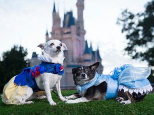 Disney Dog Halloween Costume Ideas Perfect for Your Pet ... & Disney Dog Halloween Costume Ideas Perfect for Your Pet | Disney ...