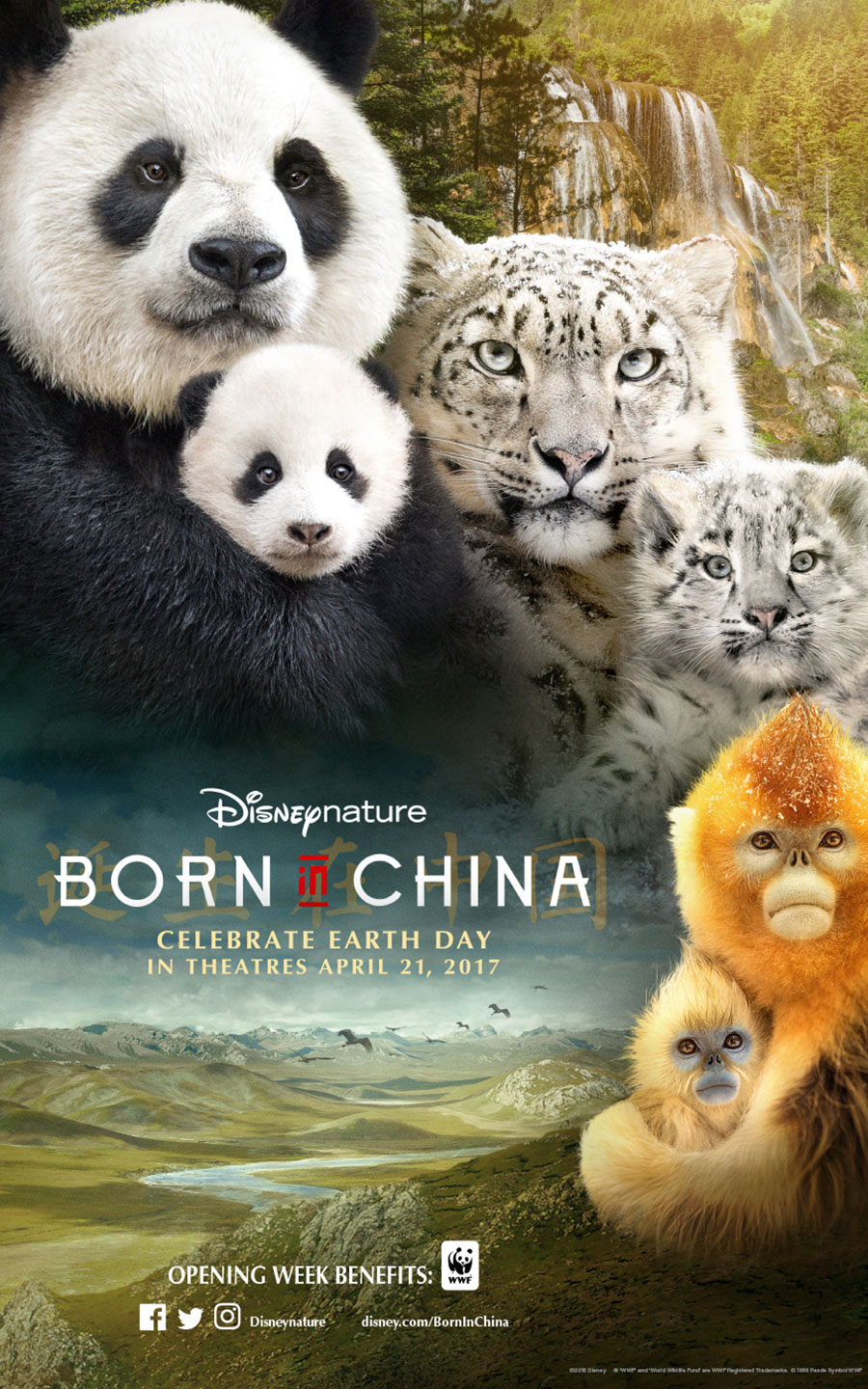 Image result for born in china
