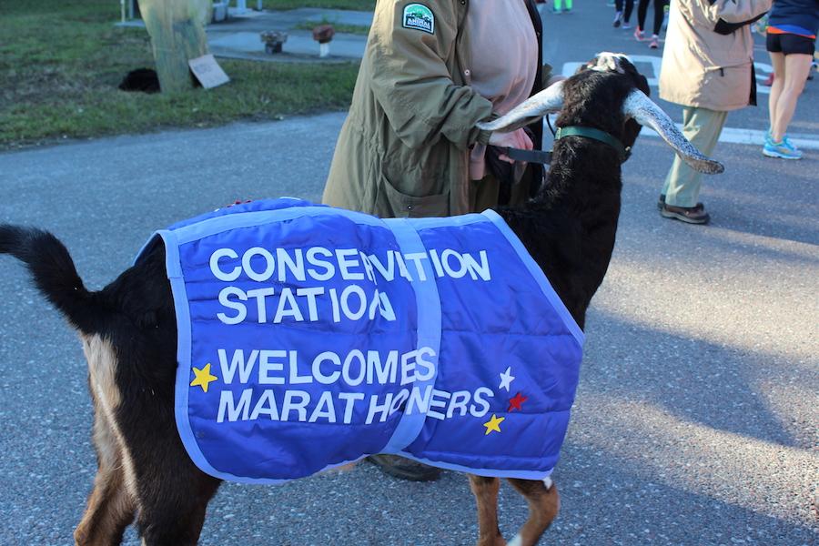Animals Supporting Runners During the Walt Disney World Marathon